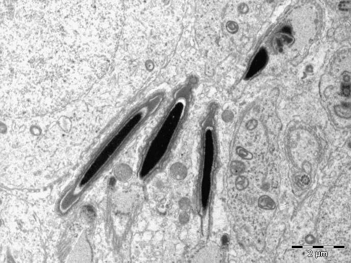 Site interativo em Nanomedicina